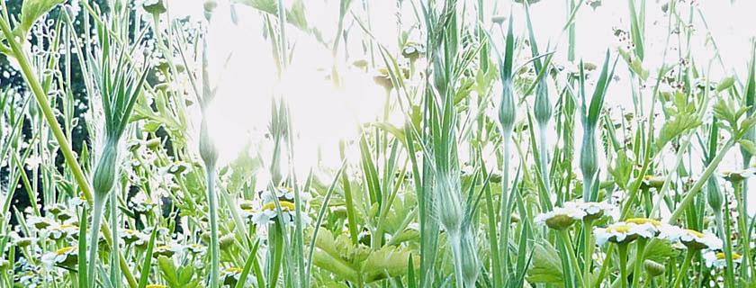 Salve - din oas för kropp och själ
